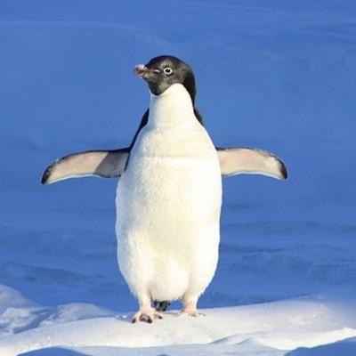 130806_penguin.jpg