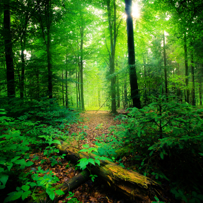 140605_spruce-woods.jpg