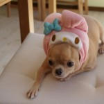小型犬と泊まれる伊豆高原の宿「ブランニューデイ」が至れり尽くせり